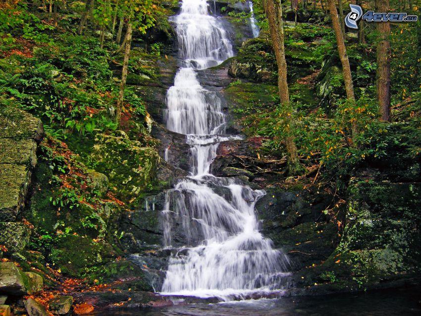 Buttermilk Falls, Wasserfall im Wald, Kaskaden, Bäume