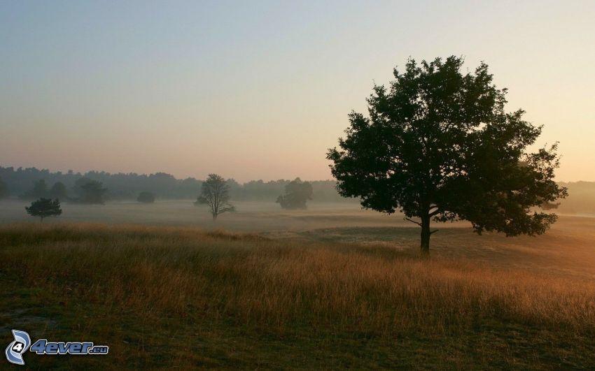 einsame Bäume, Boden Nebel, Wiese