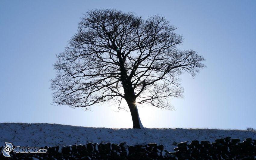 einsamer Baum, Schnee