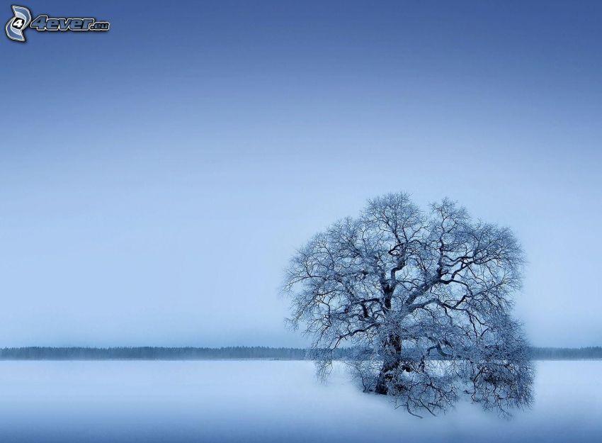 einsamer Baum, schneebedeckter Baum, verschneite Landschaft