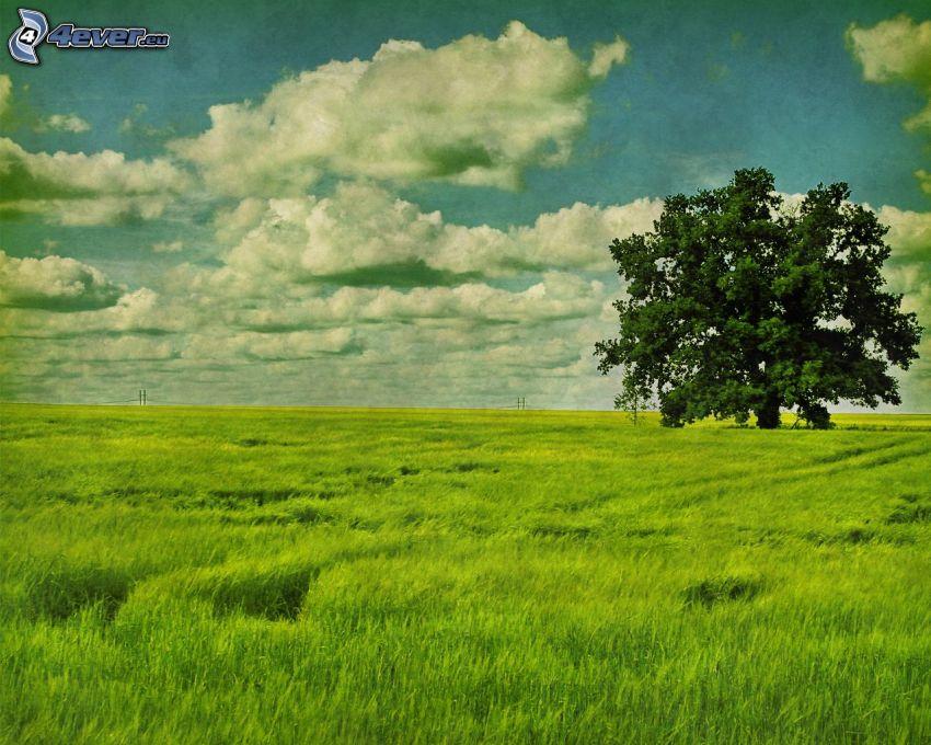 einsamer Baum, Wiese, Wolken