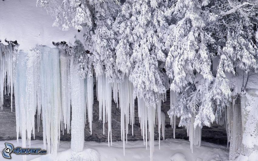 Eiszapfen, gefrorener Baum