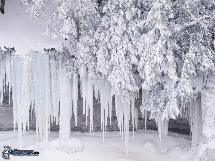 Eiszapfen, schneebedeckter Baum