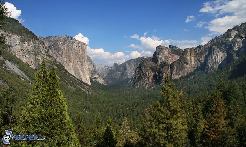 El Capitan, Yosemite-Nationalpark, Wald