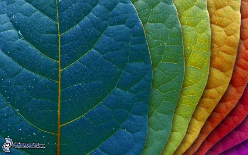 farbigen Blätter