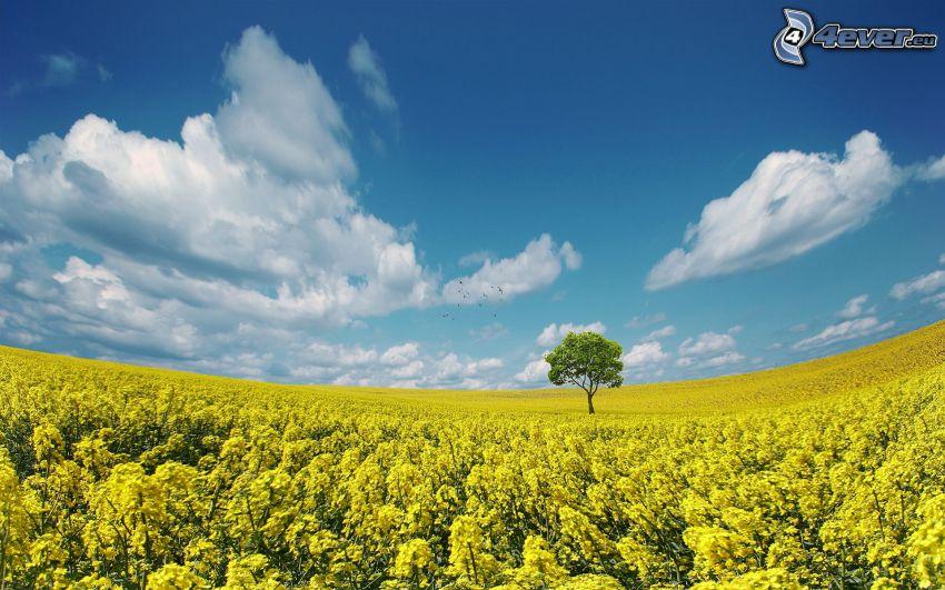 Feld, gelbe Blumen, Baum, Wolken, blauer Himmel