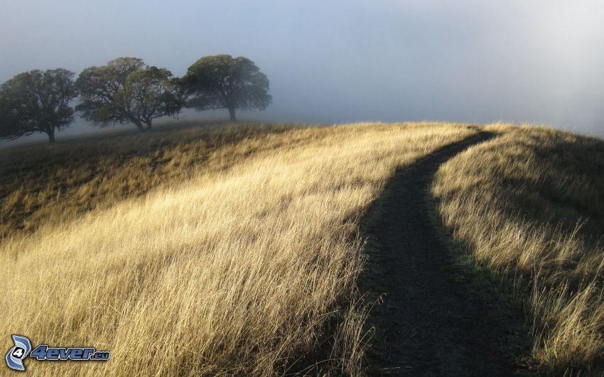 Feldweg, Bäume