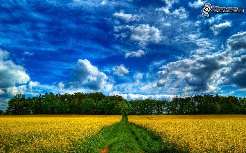 Feldweg, gelbes Feld, Hain, Wolken