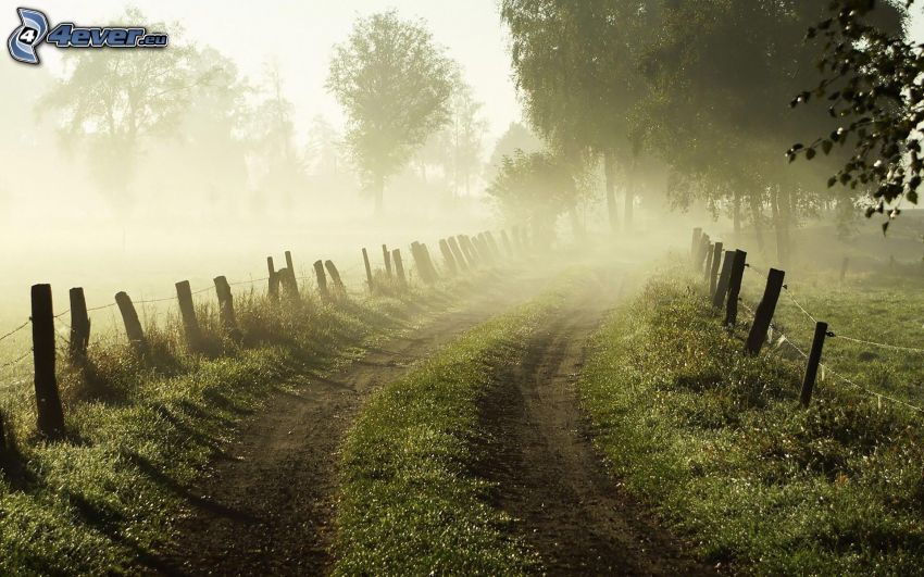Feldweg, Zaun, Bäume, Boden Nebel