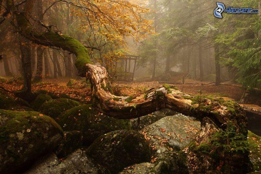 Felsbrocken, Moos, gelber Baum, Nadelbäume, Nebel