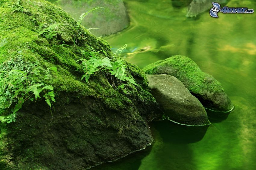 Felsen, Fluss, Moos