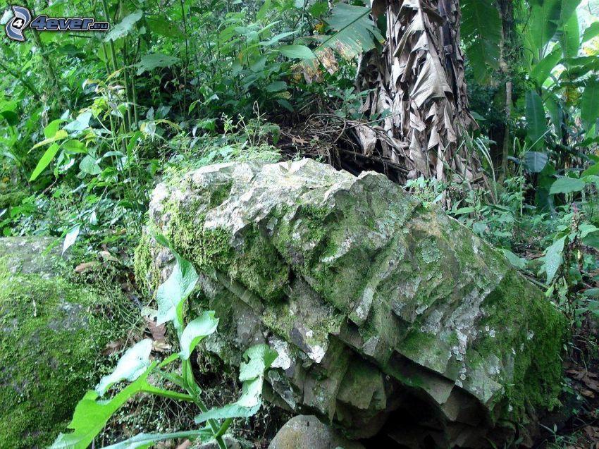 Felsen, Moos, Pflanzen, Wald