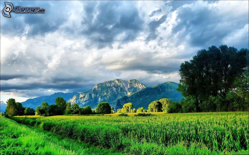 felsige Berge, Feld, Bäume, Wolken