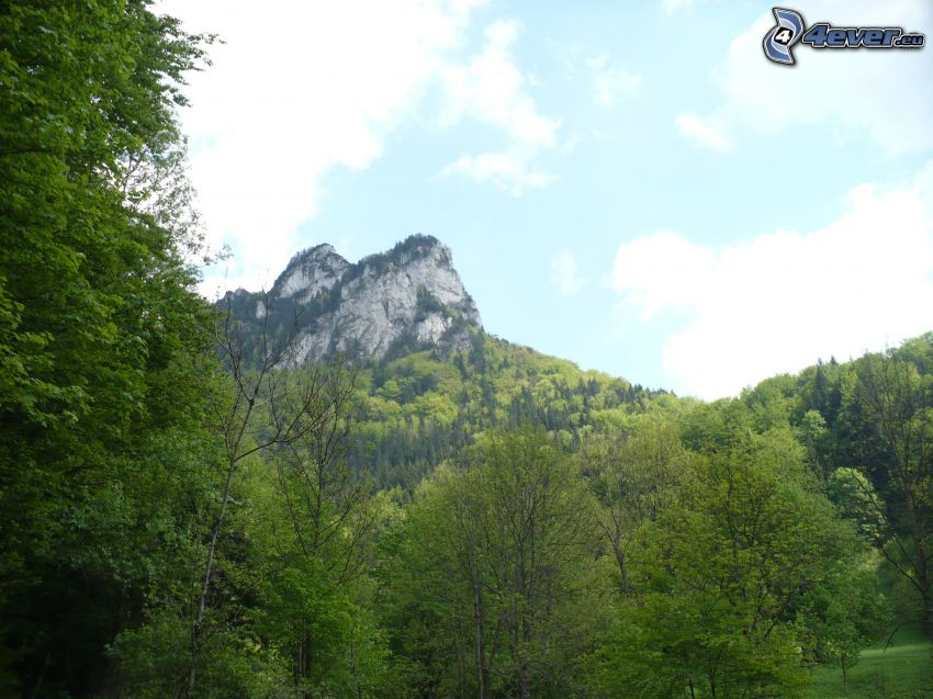 felsiger Berg, Bäume
