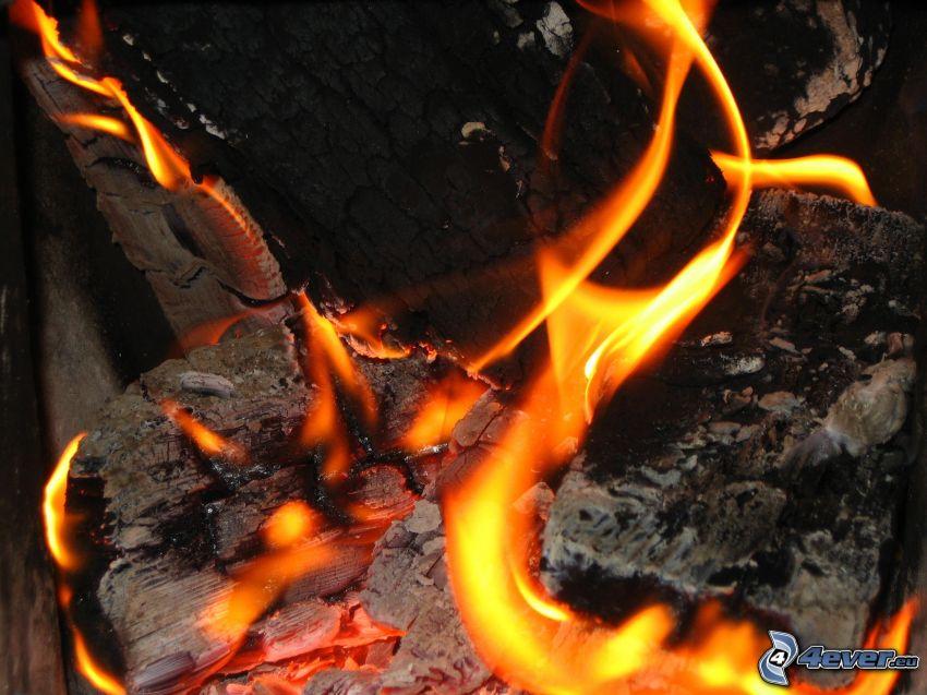 Feuer, heiße Kohlen