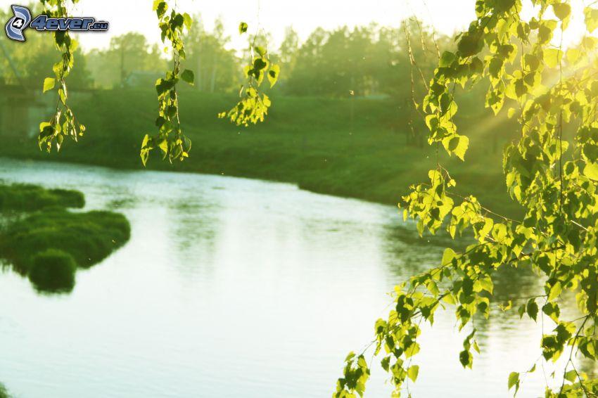 Fluss, Bäume, grüne Blätter, Grün