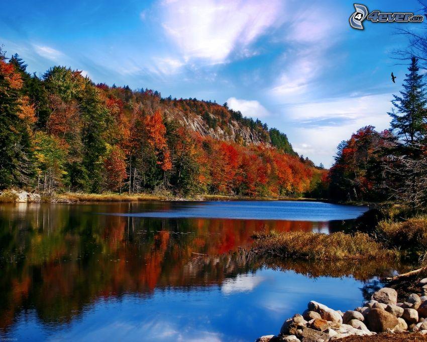 Fluss, bunter herbstlicher Wald, Felsen