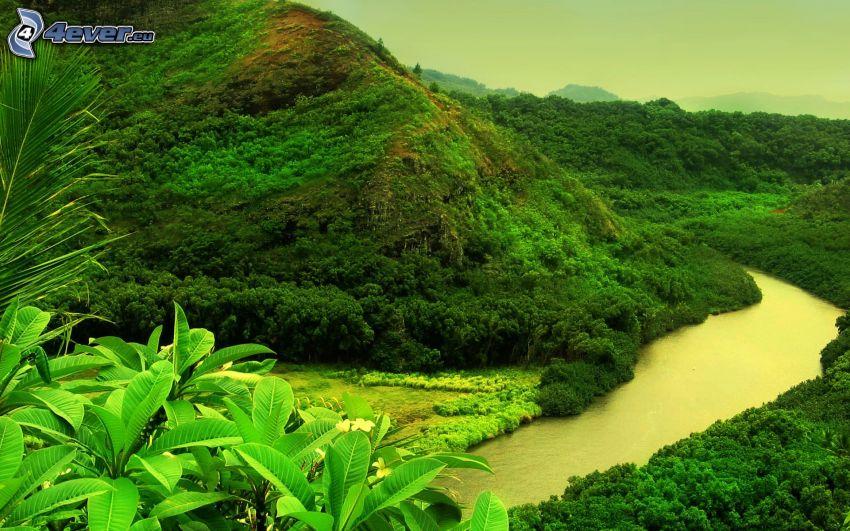 Fluss, Hügel, Urwald