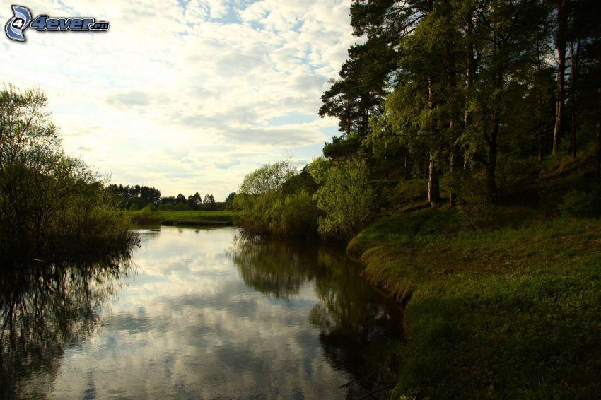 Fluss, Wald, Grün, Wolken