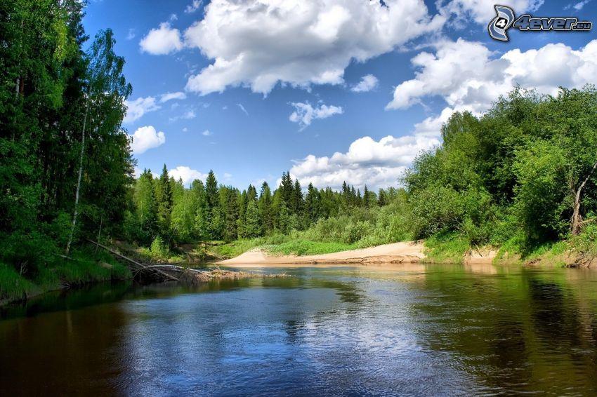 Fluss, Wald
