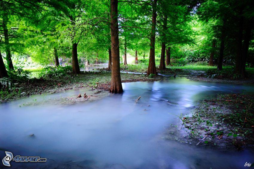 Fluss im Wald, Grün