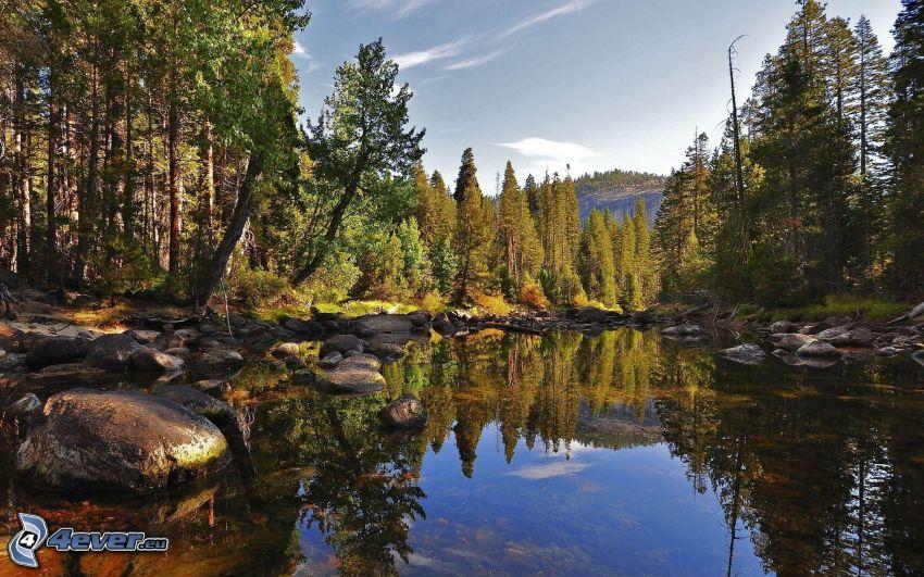Fluss im Wald, Spiegelung