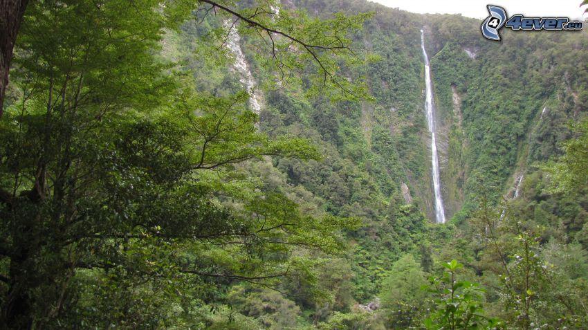 forstlicher Wasserfall, Bäume