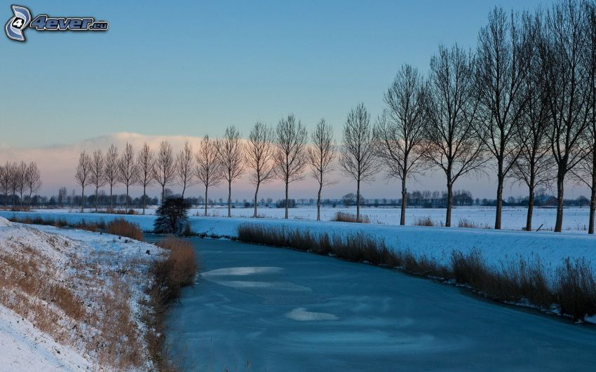 gefrorener Bach, Baumreihe