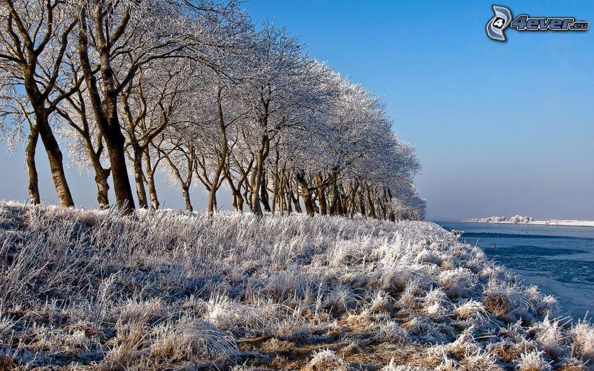 gefrorenes Gras, verschneite Bäume, Fluss