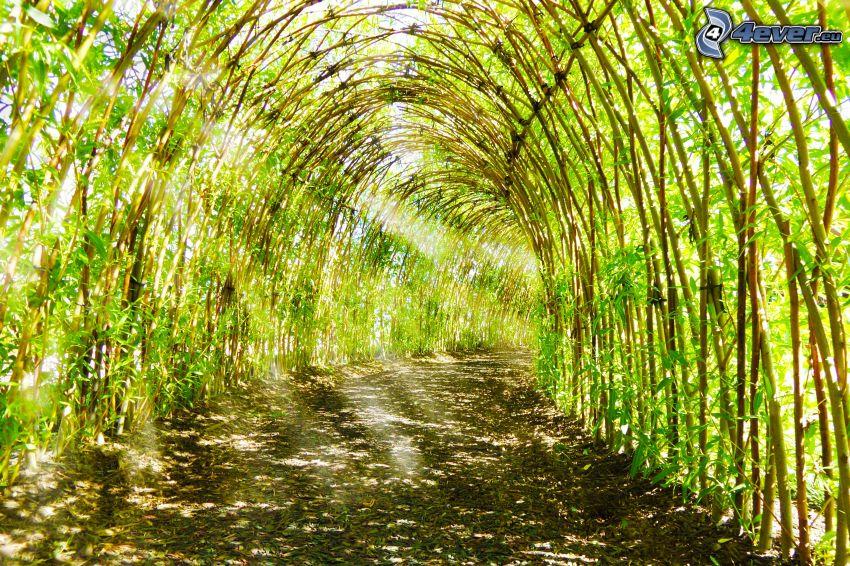 Gehweg, grüner Tunnel