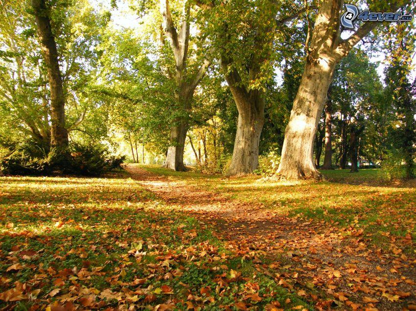 Gehweg, Park, trockene Blätter, Bäume, Herbst