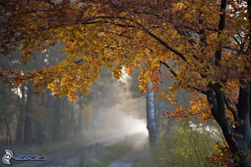 gelber Baum, Pfad durch den Wald