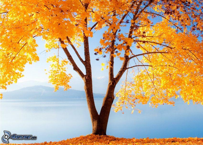 gelber Baum, See