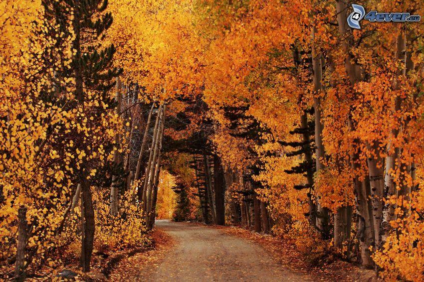 gelber herbstlicher Wald, Pfad durch den Wald