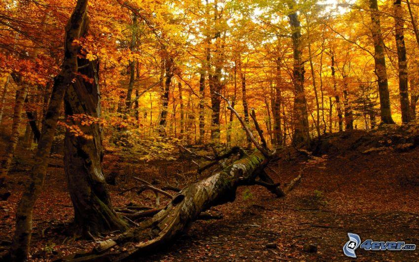 gelber herbstlicher Wald, Stamm