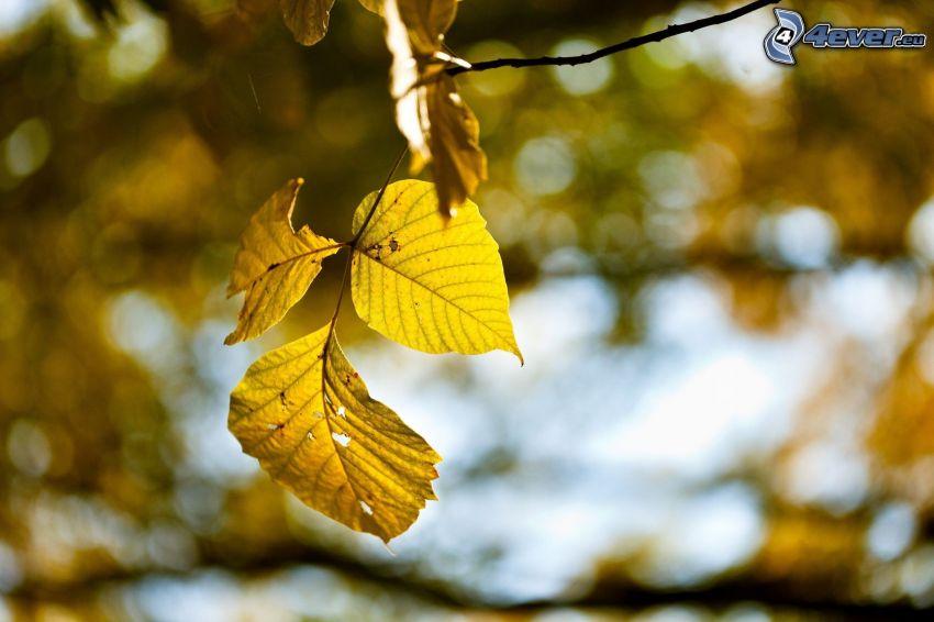 gelbes Herbstblatt, Zweig