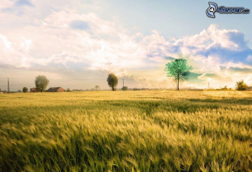 Getreidefeld, Bäume
