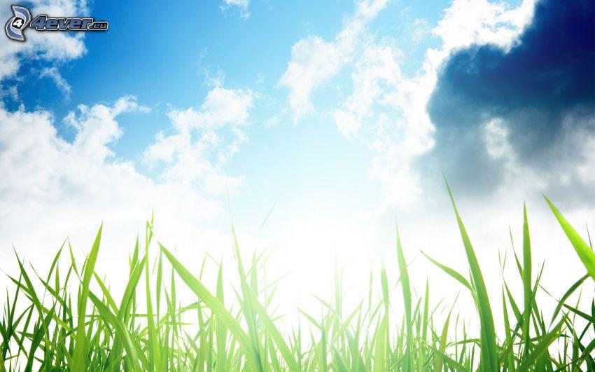 Gras, Himmel