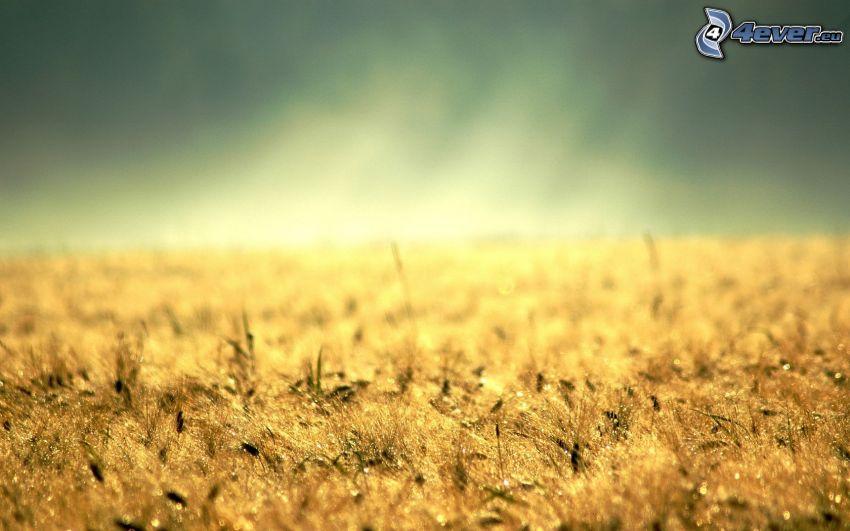 Gras, Strahlen