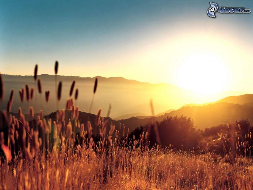 Grashalme beim Sonnenuntergang, Berge, Hügel, Himmel, Pflanzen