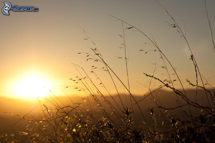 Grashalme beim Sonnenuntergang
