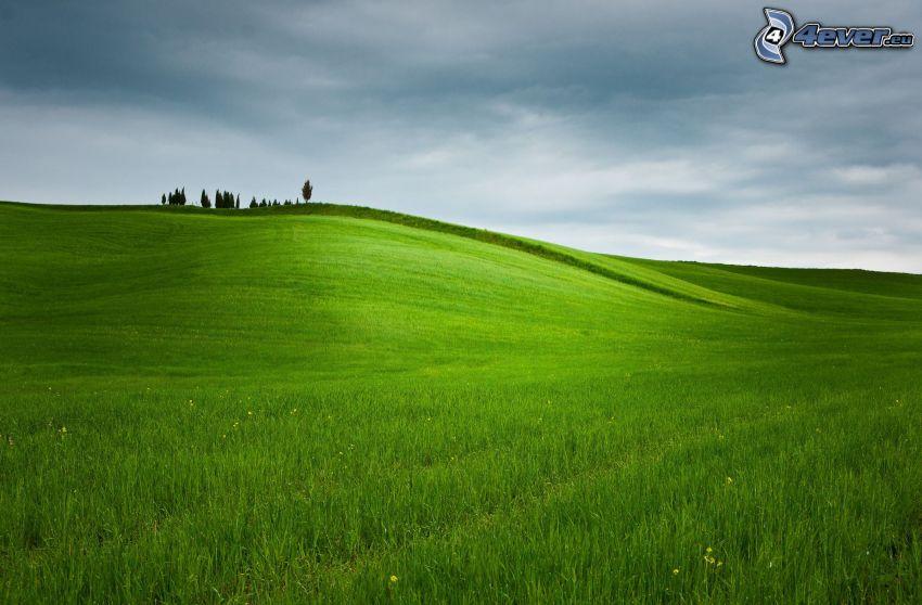 grüne Wiese, Bäume, Himmel