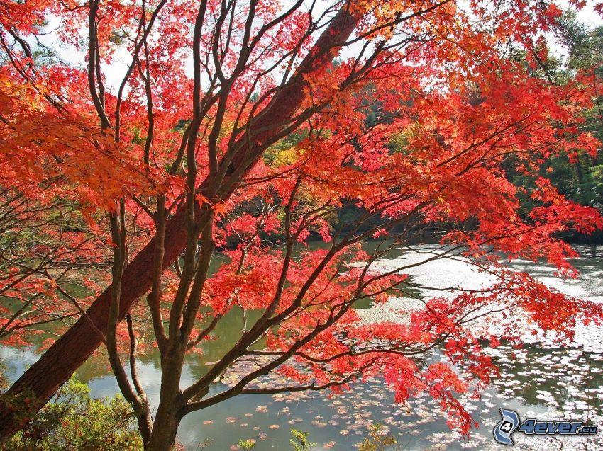Herbstlicher Baum, See