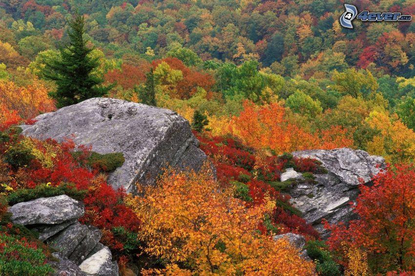 herbstlicher Wald, Felsen