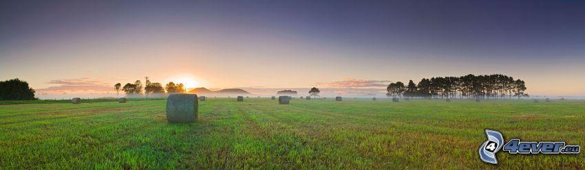 Heu nach der Ernte, Panorama, Bäume, Sonnenaufgang, Boden Nebel