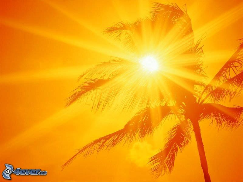 leuchtende orange Sonne, Palme