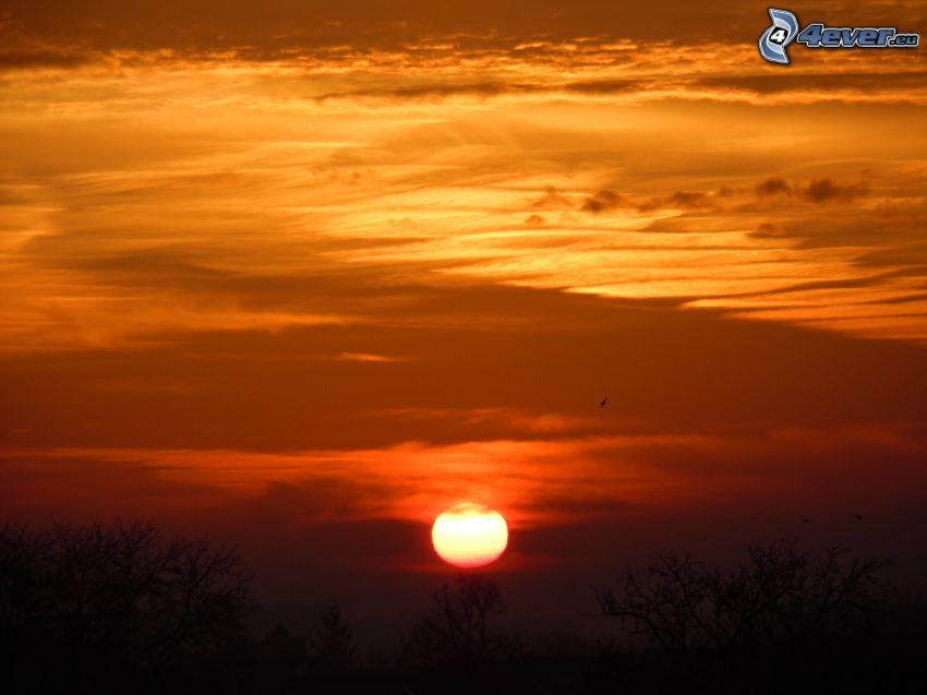 orange Sonnenuntergang, Bäum Silhouetten