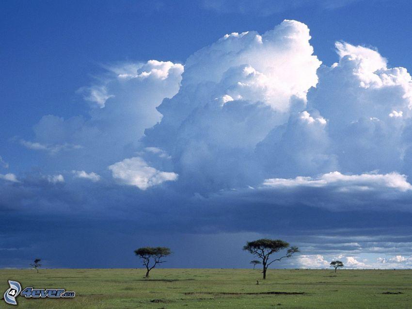 Savanne, einsame Bäume, Wolken