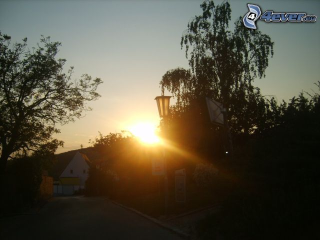 Sonnenaufgang, Bäume, Straße