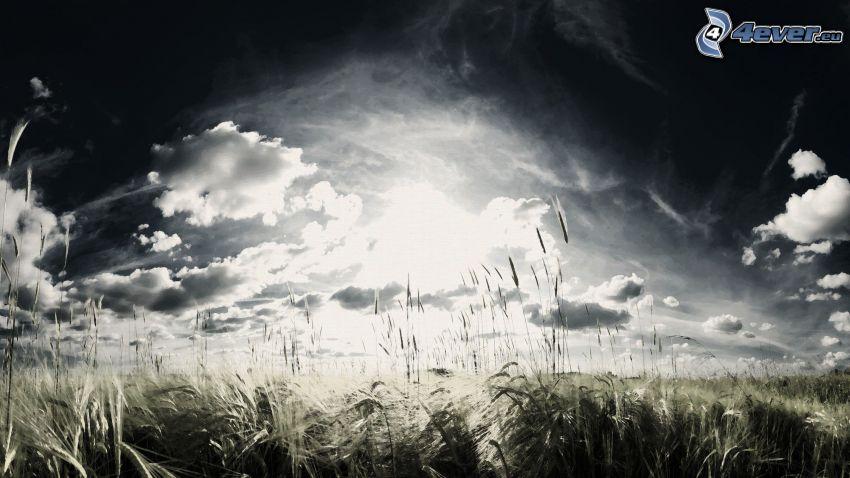 Wolken, Feld, Getreide